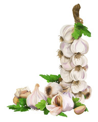 Decoration of garlic-Mace garlic on a white background