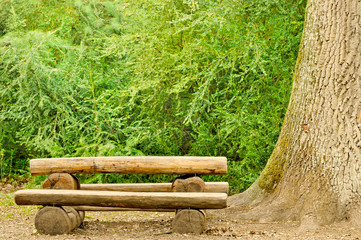 empty log bench with green background in forest