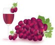 Grapes and vine Vector