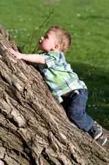 kleiner Junge klettert auf Baum