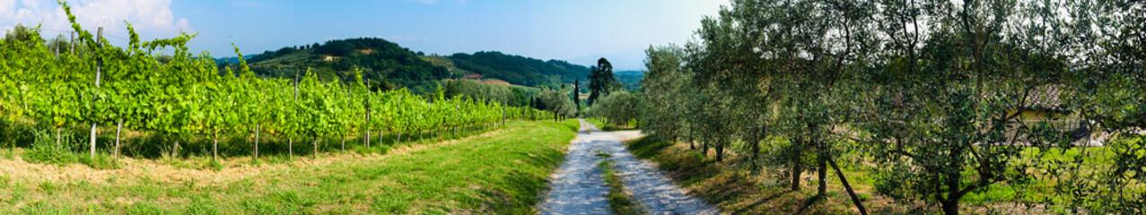 Panoramica - Vigna e Olivi