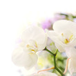 orchidées, bordure décorative