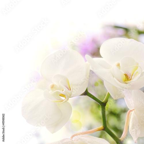 Fototapeten,blume,orchidee,orchidee,floral