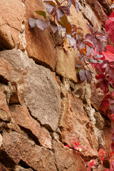Brown stones. Red ivy leaves. Background.
