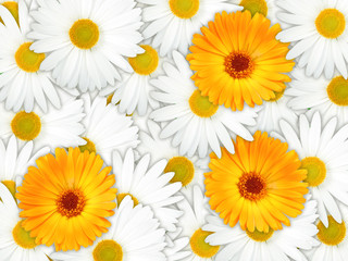 Background of orange and white flowers