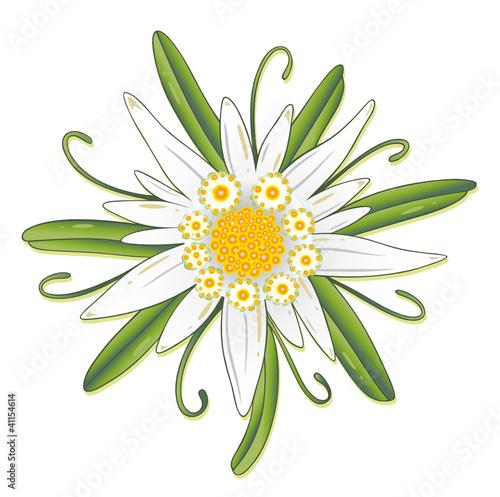Oktoberfest, Edelweiss, Edelweiß, Blume, Blüte