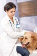 Female veterinary surgeon examining dog