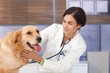 Young vet examining dog
