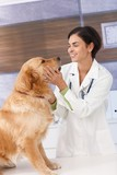 Smiling veterinary with dog