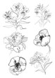 Drawing flowers set