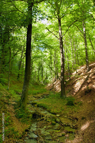 creek in the woods in spring - 41165238