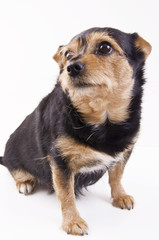 The dog molly