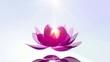Beautiful Lotus Blossom