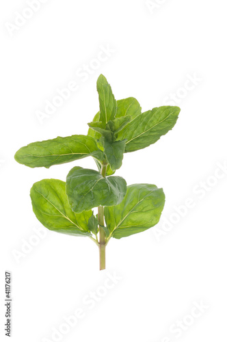Twig of mint