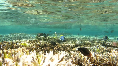 coral reef and tropical fish underwater in Maldives