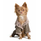 Chihuahua with raincoat