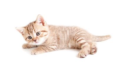 Little baby kitten lying