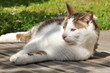 chat sur terrasse