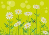 Fototapeta biały - żółty - Kwiat