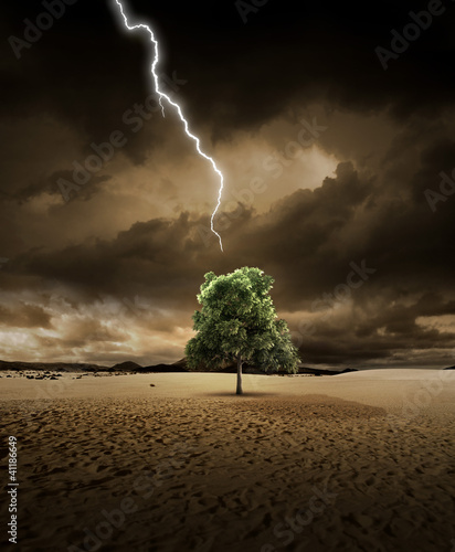 Lighting on desert tree