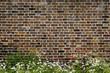 Brick wall and daisies - 41192625