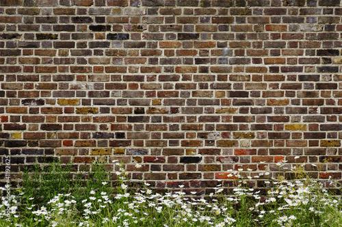 Leinwanddruck Bild Brick wall and daisies