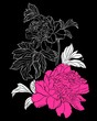 pink peony on black background