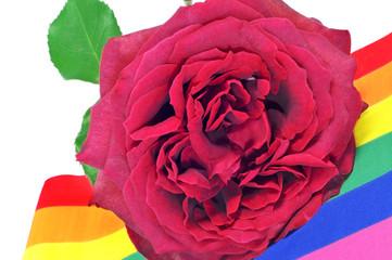 gay rose