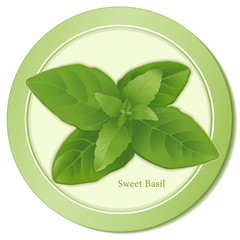 Sweet Basil Herb, for Italian, Mediterranean, Asian cooking.