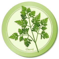 French Chervil Herb, taste of anise, in cooking, Fines Herbes