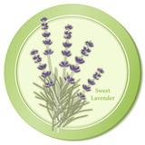 Fototapety Sweet Lavender Flowers, Herbes de Provence, cooking, perfumes