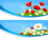 Flower banners with summer daisies and poppies. Vector.