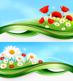 Naturel banners with daisies and poppies. Vector.