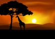 African Sunset background with giraffe