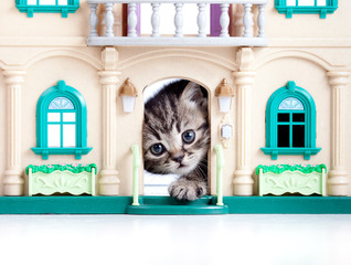 kitten looking out toy house door