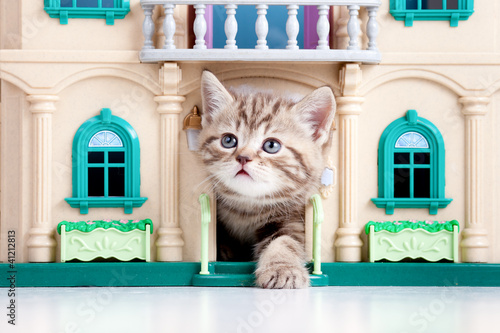 kitten playing in toy house - 41212813