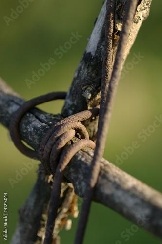 Vecchi tiranti delle vigne