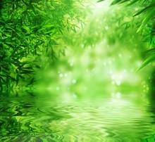 Zen Bamboo Forest, le soleil et l'eau.