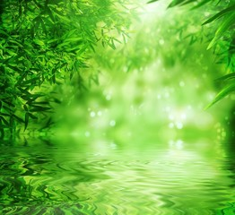 Zen Bamboo Forest,sun and water.