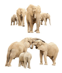 Family of Elephants Isolated