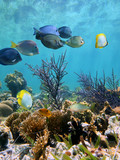 Underwater coral reef with tropical fish on shallow seabed, Caribbean sea, Mexico