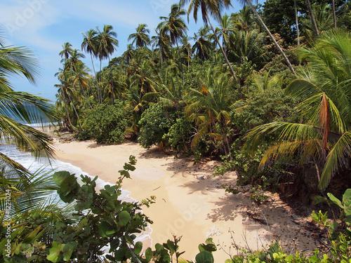 Fototapeten,schatten,kokos,baum,strand