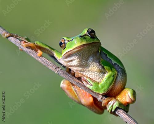 Foto op Plexiglas Kikker Frog