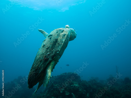 Injured loggerhead sea turtle swimming on reef