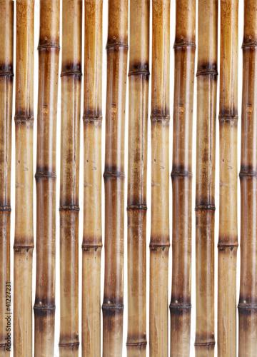 bambusowa-sciana
