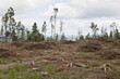 Clearcutting area