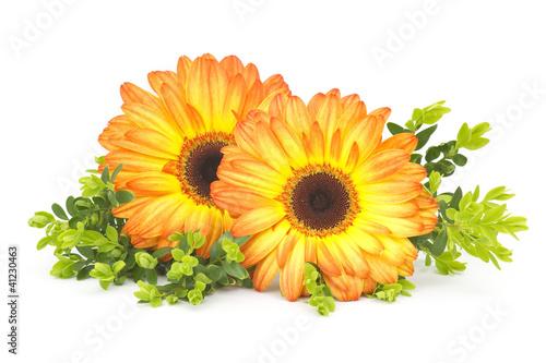 Keuken foto achterwand Gerbera gerbera daisies