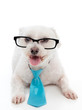 Dog wearing eye glasses