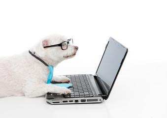 Savvy dog using a computer laptop