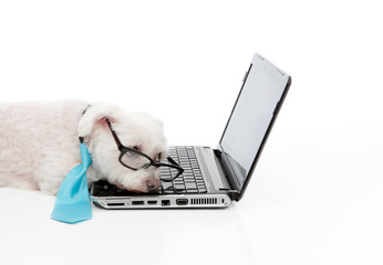 Tired or overworked dog sleeping at computer laptop